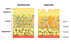 The elasticity of skin by age.